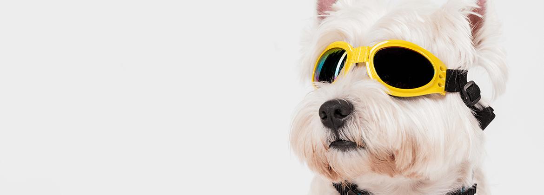 Plaque de rue chien de garde à personnaliser - Signalisation Portail Chien Méchant